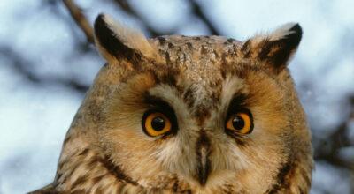 Immagini Fauna